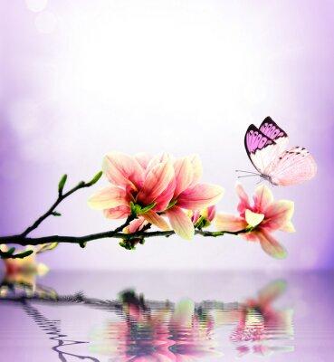 Фотообои Бабочка и цветок магнолии