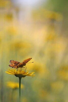 Фотообои Бабочка в саду