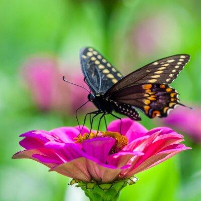 Фотообои Бабочка на цветке