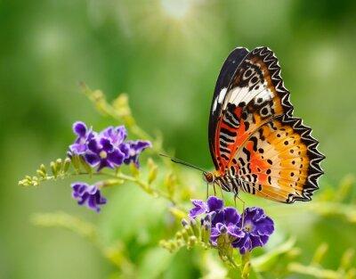 Фотообои Бабочка на фиолетовый цветок