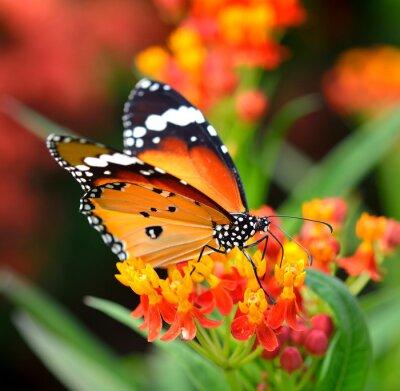 Фотообои Бабочка на оранжевый цветок в саду