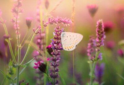 Фотообои Бабочка на дикий цветок
