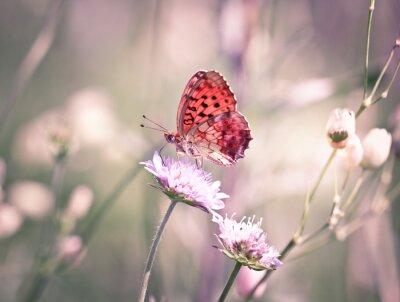 Фотообои Бабочка на диких цветов