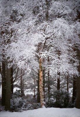 Фотообои Каирнгормс, Шотландское нагорье