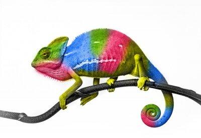 Фотообои хамелеон - цвета