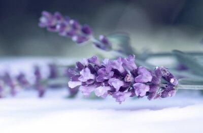 Фотообои Cloce из лаванды цветок
