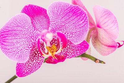 Фотообои Крупным планом орхидеи цветут