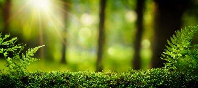 Фотообои Макрофотография на мох в лесу