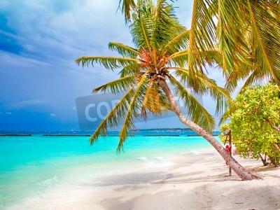 Фотообои Кокосовое Palm Beach