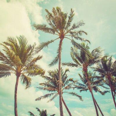 Фотообои Кокосовой пальмы и голубое небо облака с старинные тона.