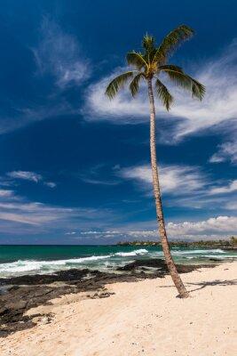 Фотообои Кокосовая пальма на Гавайском пляже, Большой остров