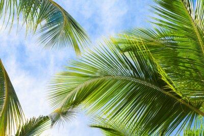 Фотообои Листья кокосовой пальмы