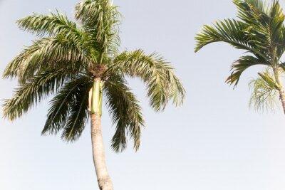 Фотообои Кокосовое дерево и голубое небо на летнем пляже