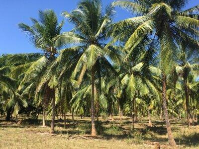 Фотообои Кокосовые деревья