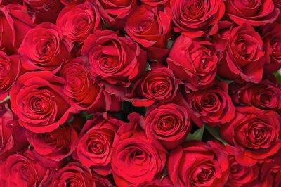 Фотообои Красочный букет из красных роз для использования в качестве фона.