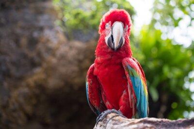 Фотообои Красочный попугай, ара птица