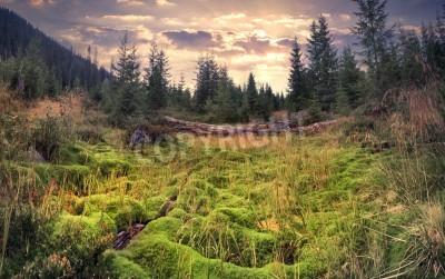 Фотообои Красочный летний рассвет в волшебном лесу с огромным ковром из зеленого мха