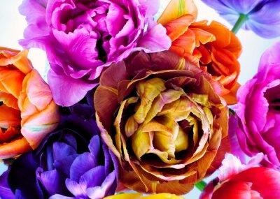 Фотообои Colorful tulips in vintage style