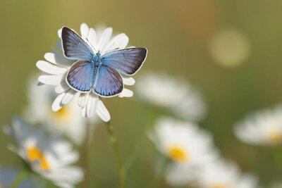 Фотообои Общие Голубая бабочка