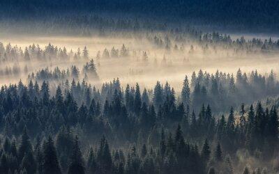 Фотообои хвойный лес в туманных горах