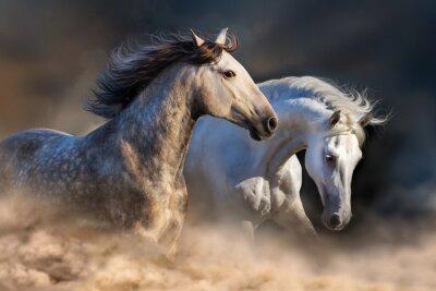 Фотообои Пара лошади работать в пыли на закате света