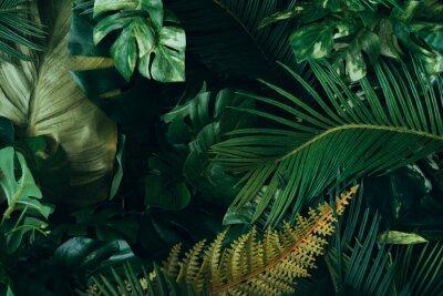 Фотообои Creative layout made of tropical leaves. Flat lay. Nature concept.