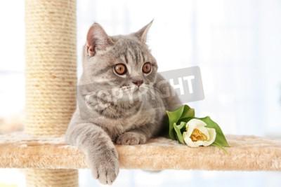 Фотообои Симпатичная кошка, лежащая на точилке коготь с тюльпаном в светлой комнате
