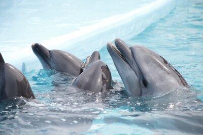 Фотообои милые дельфины во время выступления в дельфинарии