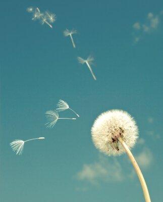 Фотообои Одуванчик и летающий волосками, с ретро эффект