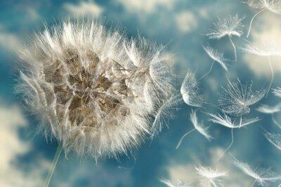 Фотообои Одуванчик потери Семена на ветру