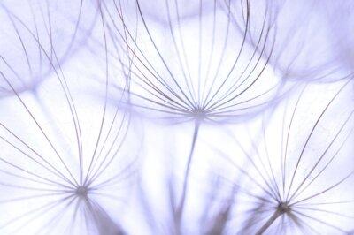 Фотообои Одуванчик семена