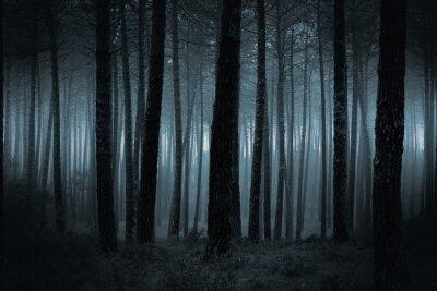 Фотообои Dark туманный лес