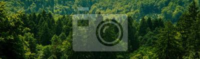 Фотообои Dark green forest landscape