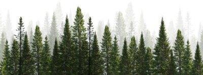 Фотообои dark green straight trees forest on white