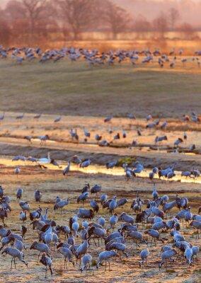 Фотообои Рассвет света на поле с кранами