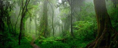 Фотообои Глубокие тропические джунгли Юго-Восточной Азии в августе