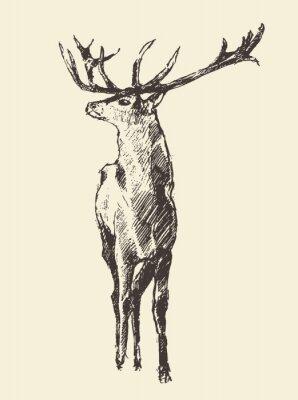 Фотообои Олень Гравировка, старинные иллюстрации, вектор