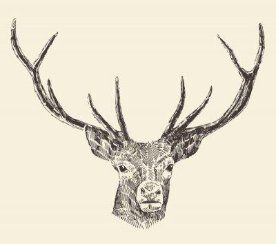 Фотообои Голова оленя старинные иллюстрации, ручной обращается, вектор