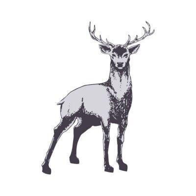 Фотообои Deer isolated on white