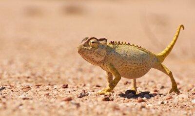 Фотообои Пустыня Chamaeleon в Намиб, Намибия