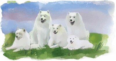 Фотообои Собака хаски