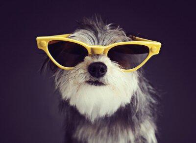 Фотообои Собака в очки 2