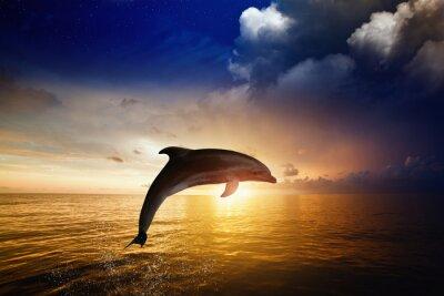 Фотообои Дельфин прыжки