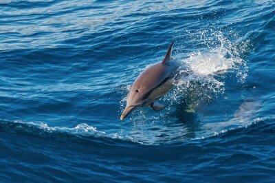 Фотообои Дельфин прыгает из воды