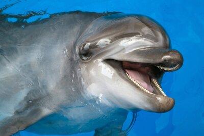 Фотообои Дельфин глядя