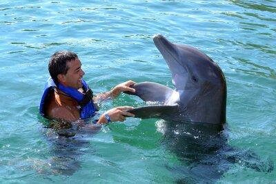 Фотообои дельфин плавать с человеком
