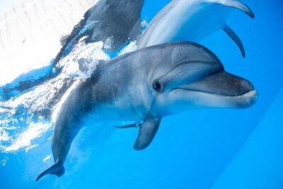 Фотообои Dolphin swims under the water
