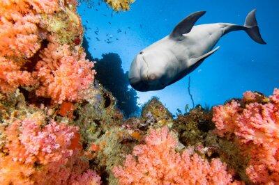 Фотообои дельфин под водой на синем фоне океана