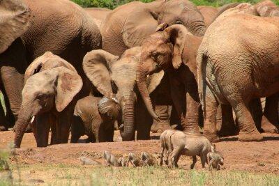Фотообои Слоны ADD0 07