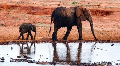 Фотообои Слон в Тсаво Ист Национальный парк